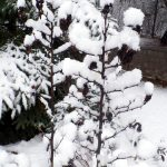 snowingG