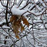 snowingL