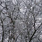 snowingT
