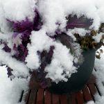 snowingF